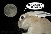 2013_0919_moonrabi_02