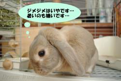 2014_syoka_01
