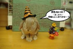 2014_rabi_halloween_03