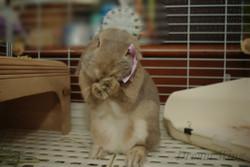Rabi_birthday3_01