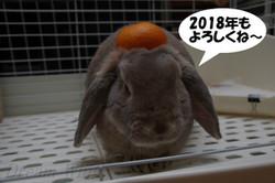 2018_rabi_01